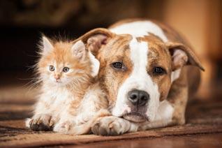 Betriebshaftpflicht Tierbetreuung