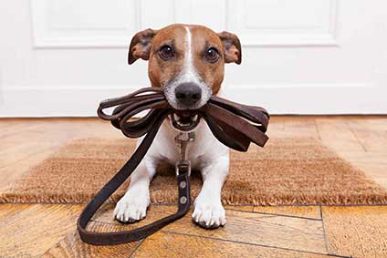 NEODIGITAL Hundehaftpflicht