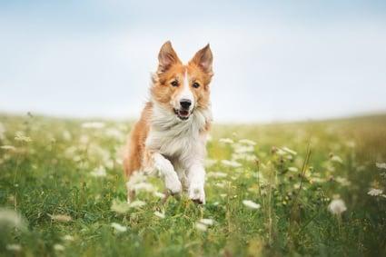 Mit einer Hundepension selbständig machen