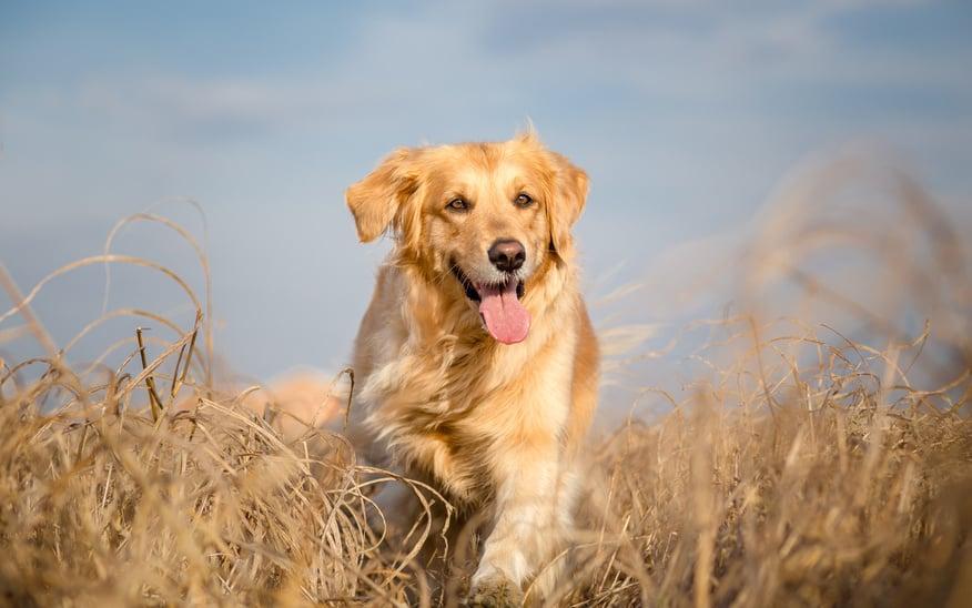 Betriebshaftpflicht Hundeschule