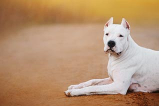 Hundehaftpflicht Listenhund