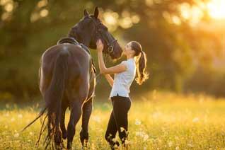 Pferdehaftpflicht Vergleich: Haftpflicht Pferde Besitzer günstig versichern.